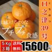 【送料無料】口之津39号(5kg×3箱)