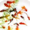 すくい金魚MIX SMサイズ 10匹