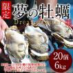 生牡蠣 殻付き 特大 夢牡蠣 20個 生食用 生ガキ 大粒生牡蠣 特大 バーベキュー[御歳暮 ギフト]