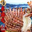 送料無料 車海老 活【中M】天草 車えび 500g 熊本県産 獲れたて 生き活き 養殖場直送