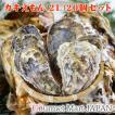 カキえもん[2Lサイズ]20個セット 北海道厚岸産 牡蠣 殻付き 牡蠣 生食 お中元 御中元 お取り寄せグルメ プレゼント ギフト