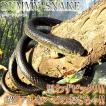 ドッキリ ヘビ ダミースネーク 1.3m 蛇 ジョークグッ...