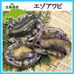 エゾアワビ(中・80g )×3個 北海道産蝦夷鮑 殻長約8cm前後