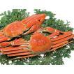 ズワイガニ(500g)×2尾