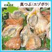 真ツブ貝1Kg(4〜6個) /北海道産