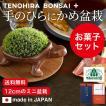 こけ盆栽とお菓子のギフトセット(こけ 苔 コケ 盆栽 ...