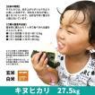 令和元年度産 キヌヒカリ 精米 白米 27.5kg 兵庫県上郡町産 送料無料