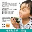 令和元年度産 キヌヒカリ 精米 白米 10kg(5kg×2袋) 兵庫県上郡町産 送料無料