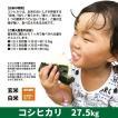 令和2年度産 コシヒカリ 精米 白米 27.5kg 兵庫県上郡町産 送料無料