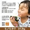 令和元年度産 ヒノヒカリ 精米 白米 27.5kg 兵庫県上郡町産 送料無料