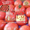 親バカトマト約4kg LMサイズ 20個〜24個入り いわき市産