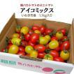 アイコミックス1.2kg入り 親バカトマトのミニトマト いわき市産