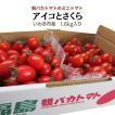 アイコとさくら1.8kg入り 親バカトマトのミニトマト いわき市産