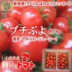 プチぷよ 約1kg入り 親バカトマトのミニトマト いわき市産