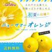 ニューサマーオレンジ 3.5kg  厳選 国産果実 果物 フルーツ 送料無料 スミフル sumifru こだわり 【他の商品との同時購入不可】 【5/22発送予定】