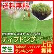 芝生 天然芝 ティフトン芝 ピース 1ケース50個入 (芝生 通販)