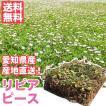 芝生 天然芝 花マット リピア ヒメイワダレソウ ピース 1ケース50個入 (芝生 通販)