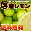 瀬戸内産 国産レモン4kg【送料無料】傷あり・不揃い