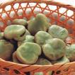 冷凍食品 業務用 冷凍そら豆 500g   約100粒    お弁当 大粒 簡単 時短 野菜 まめ 豆 マメ