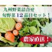 九州産 新鮮野菜 10品目詰合せセット