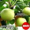 二十世紀梨 進物用 5kgセット 2L 16玉入 送料無料 鳥取県産 常温