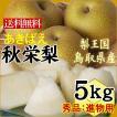 秋栄梨 あきばえ 梨 鳥取県産 進物用 5kgセット 14-20玉入 送料無料 常温