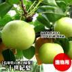 二十世紀梨 進物用 10kgセット 2L  32玉 送料無料 鳥取県産 常温