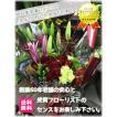 記念日 花束 スタンダード 東京市場コンテスト特別賞フローリストが贈る