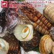 鮮魚 BBQセット 朝獲れ鮮魚BBQセット 2-3人前 とれたて新鮮魚介 魚の詰め合わせ 下処理可能【北海道・沖縄・離島への配送不可】