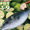 ぶり 生食用 ぶりフィレ 片身 1枚 1.5Kg前後 ブリ 鰤 刺身 寿司 冷蔵 お歳暮 海鮮【着日指定は12月28日まで】