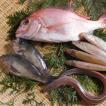 瀬戸の小魚セット(天然鯛・メバル2尾・きす4尾・穴子)