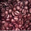 ブラジル 不毛の地で育つ テラ・デ・オーロ コーヒー豆300g