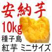 安納芋 チビころ(ミニ・2S)/10kg 種子島産/子供応援企画 だからこそ日本一の安さに挑戦中!送料上乗せしても絶対お得 更にお芋粉無料進呈中
