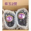 ぶどう 紫玉 2〜3房 京都府産