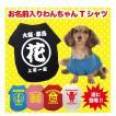 犬用 Tシャツ お名前入りお祭り犬Tシャツ