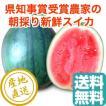 スイカ フルーツ Fruits 小玉スイカ 2Lサイズ2.3kg〜2.7kg 1玉 千葉県富里産 県知事賞受賞農家の秋西瓜