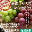 ぶどう フルーツ Fruits 秀品ぶどう2色セット シャインマスカット と クイーンニーナ 2kg箱 2〜4房 山梨県産 産地直送 送料無料 人気 ギフト