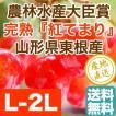 さくらんぼ 紅てまり フルーツ Fruits L〜2Lサイズ バラ詰め 1000g箱 山形県東根産 送料無料 お中元 御中元 ギフト