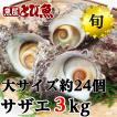 サザエ 天然 活 3kg (27-39個) 若狭湾産 さざえ お徳用 熨斗対応