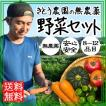 野菜セット 無農薬 8〜12品目 送料無料 野菜詰め合わせ 西日本 静岡県