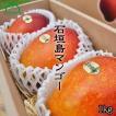 石垣島産マンゴー1kg (3玉入)(送料無料)(農園直送)