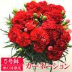 遅れてごめんね 母の日 ギフト 花 カーネーション 送料無料 5号鉢 赤 レッド 鉢植え プレゼント ギフト