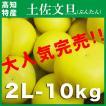 土佐市の文旦(ぶんたん)2L-10kg