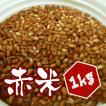 【1kg】岡山県産 赤米 1kg