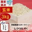 玄米 3kg 茨城県産ミルキークイーン しづくのしずく