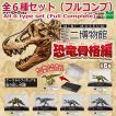 【全部揃ってます!!】ミニ博物館 恐竜骨格編 [全6種セット(フルコンプ)]【 ネコポス不可 】
