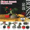 【全部揃ってます!!】BONSAI盆栽02 [全7種セット(フルコンプ)]【 ネコポス不可 】