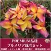 【Premium品種】プルメリア 'Butterfly Gold' ベアルート発根苗の栽培セット(スリット鉢・プルメリア専用培養土・栽培ガイドつき)