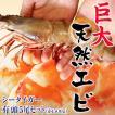 最大級の天然えび シータイガー 有頭5尾 約500g 海老 ...