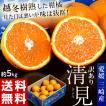 《送料無料》柑橘 愛媛・三崎産 「...